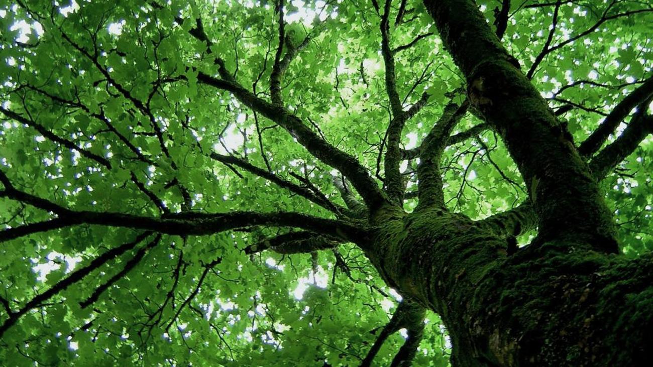 Abertas inscrições para mestrado em Ciências Florestais da UFCG